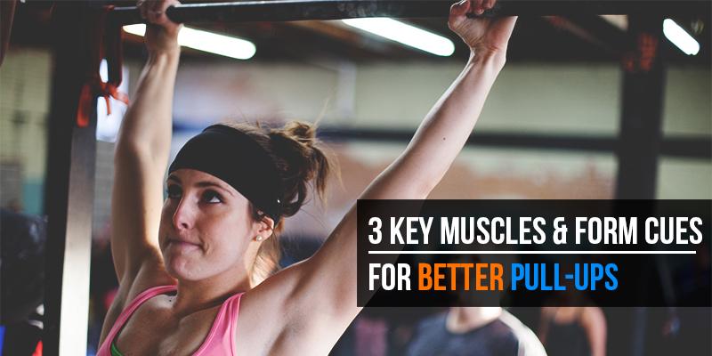 Large body mechanics   3 key muscles